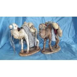 Coppia cammelli lusso