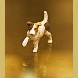 Cane con zampetta alzata