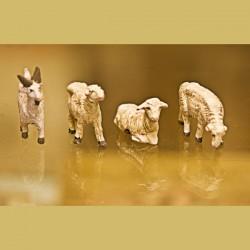 Capra e pecore