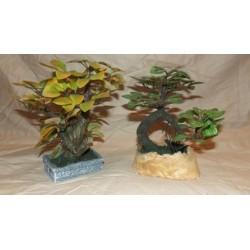 Alberelli tipo e colori assortiti cm 9x14 circa
